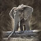 Elephant by RickDavis
