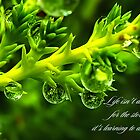 Dance in the rain by Adrian Harvey