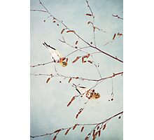 Goldfinch Gymnasts  ~ Photographic Print