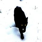 Cat in Snow by Innpictime