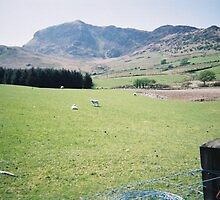 Near Dolgellau in North Wales by Peter O'Driscoll