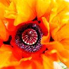 I love my red Poppy by joiwatani