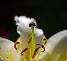 Simple Flower Close-up by mindlesswander