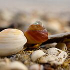Beach Shells by LILKULKA