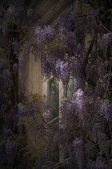 The window by EbyArts
