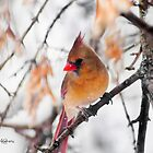 Female Cardinal by JoeDavisPhoto