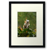 mohican in the rain Framed Print