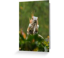 mohican in the rain Greeting Card