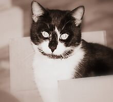 Oreo In A Box by DottieDees