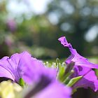 Hanging Basket 1 by OllieV