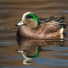 American Wigeon Drake: Reflections in Mirror Pond by John Williams