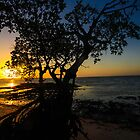 Mangrove Sunrise by Shari Galiardi