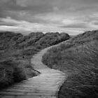 A path to where? by Stevie B