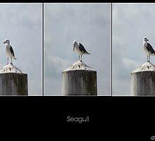 Seagull by Stevie B