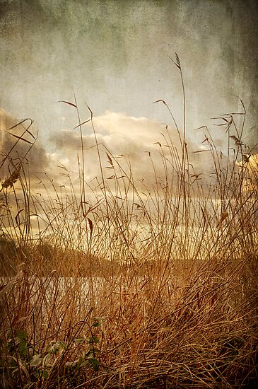 Rush by Nicola Smith