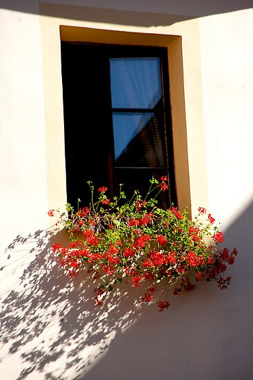 Geranium Shadows by phil decocco