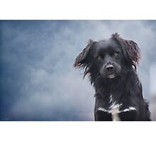 The Watchdog Photographic Print