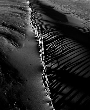 Sand Fence Shadows by Andrew Pounder