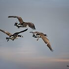 The Soar by KatMagic Photography