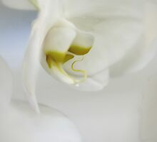 Orchid by Annie Lemay  Photography