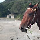 horse at te kaha by Anne Scantlebury