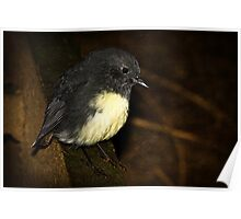 South Island Robin Poster