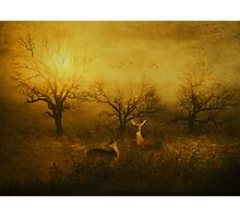 Dawns Early Light Photographic Print