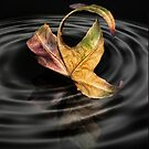 Autumn whirlpool by Lyn Evans
