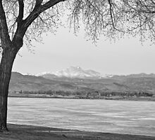 Longs Peak Winter View Black and White by Bo Insogna