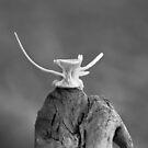 fishbone by HanselASolera