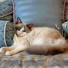 A Picture of Feline Serenity by Carol Clifford