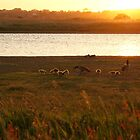 Geese at Sunset by Peter Barnes