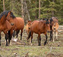 Wild Browns by JamesA1