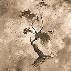 Old Zen Tree by Sean Seal