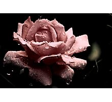 """""""Precious in Pink..."""" Photographic Print"""
