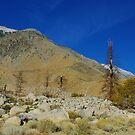 High Sierra Nevada valley by Claudio Del Luongo