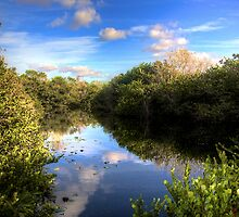 Everglades Pond by njordphoto