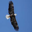 Flying Free by Thomas Young