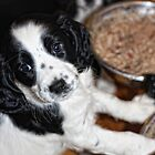 lilly at 7 weeks by Paul Morris