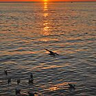 Gulls at sunset  by GreyFeatherPhot