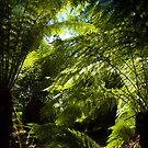 ferns by Glen Johnson