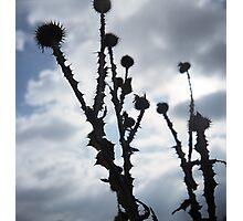 spikes Photographic Print