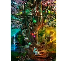 The Dreaming Tree Photographic Print