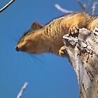 Squirrel Overhead by Deb Fedeler