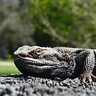 Eastern Bearded Dragon by Kate Howarth