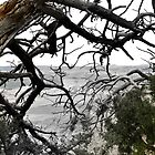 View from Scotts Bluff through trees fading black and white by Christopher Hanke