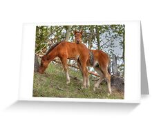 Wild Buddies Greeting Card