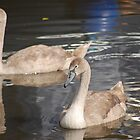 Signets Reflection by AmandaFoss87