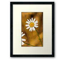 Daisy1 Framed Print