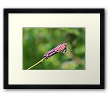 I can do it! I can do it! Framed Print